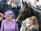 אין לה רסן: סוסת המלכה נכשלה בבדיקת סמים
